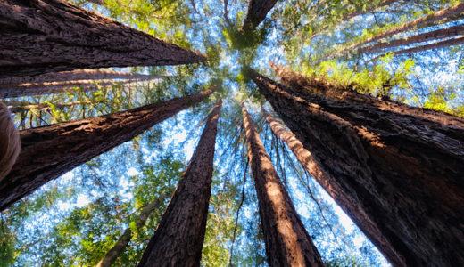 海外で自分を愛するヒーリング★サンフランシスコでデトックス・森林浴&瞑想ツアー