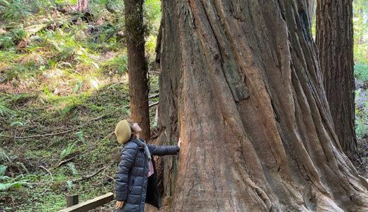 サンフランシスコ近郊で自然を満喫!ミュアウッズ国定公園