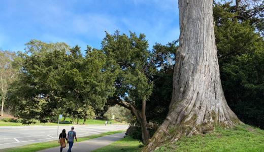 ゴールデンゲートパークはただの公園だけではない♪[美術館・博物館・植物園・ガーデン・ボートレンタル…]