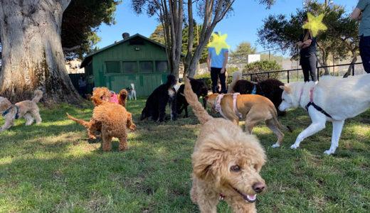 [アメリカで犬のお散歩]犬まみれで楽しい!モスコーンドッグプレイエリア Moscone Dog Play Area