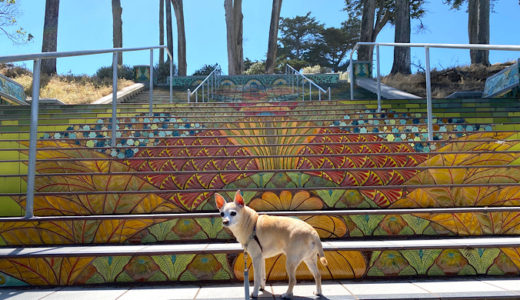 [階段アート]カラフルなタイルで造られた階段がステキ!